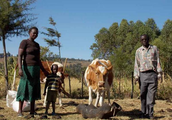 Catalyzing the Growth of Dairy Farming in Kenya